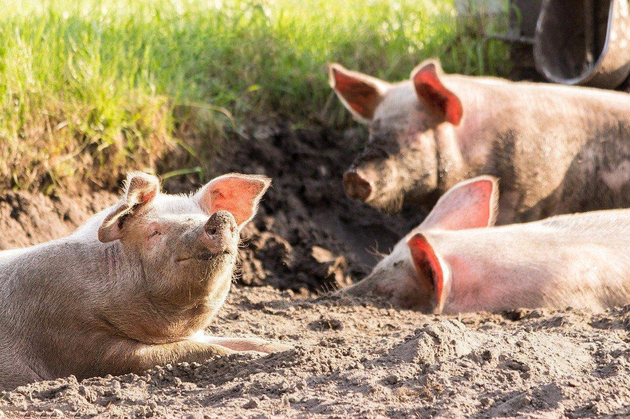 Testshop Schweinehof